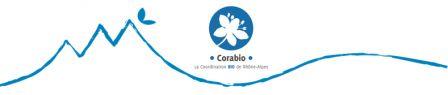 Bandeau Corabio M